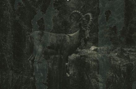 Albert af Ekenstam: Ashes